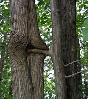 funny tree photos really rude male and female