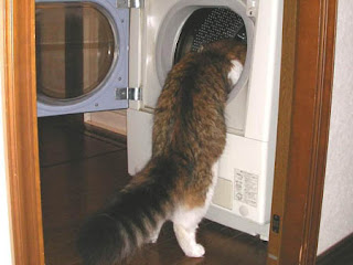 funny curious cat photo peering into clothes dryer maybe looking for lost socks