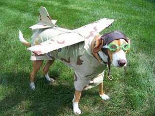 funny dog picture dressed up as a pilot and plane photo