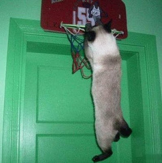 funny animal cat pics slam dunk basketball kitty