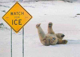funny picture of watch out for ice sign with polar bear on its back
