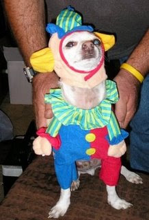 funny cute puppy dressed up as clown maybe for the circus