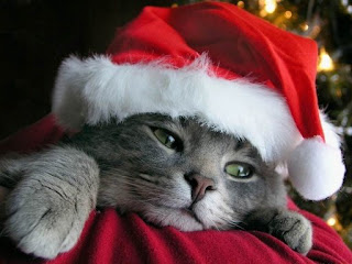 santas little helper picture of cat in christmas costume hat but looking lazy