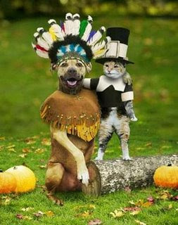 funny dog and cat photos dressed up as indian and pilgrim friends at last