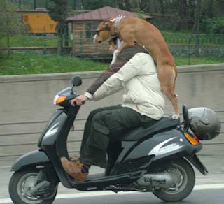 funny animal photos dog riding a motorbike holding on to driver