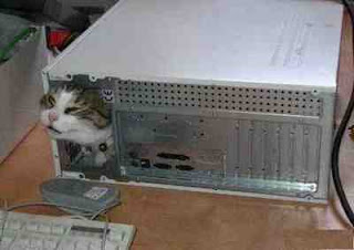 funny animal photos cat stuck inside a computer maybe looking for mouse