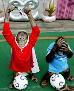funny orangutan photos soccer fans from south korea cute