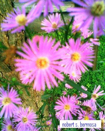 Violet Flower Picture on Entertainment Hub  The Beautiful Flowers Of Baguio City Philippines