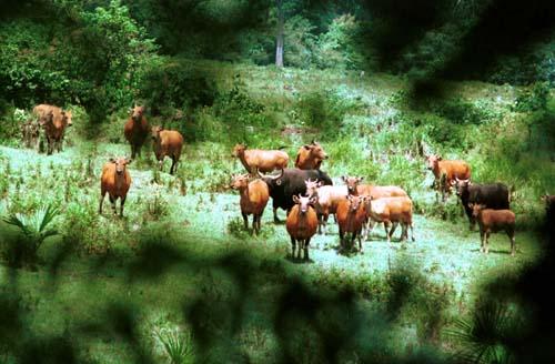 Taman Nasional Alas Purwo Di Banyuwangi Wisata Jawa