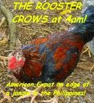 The Rooster Crows at 4am!