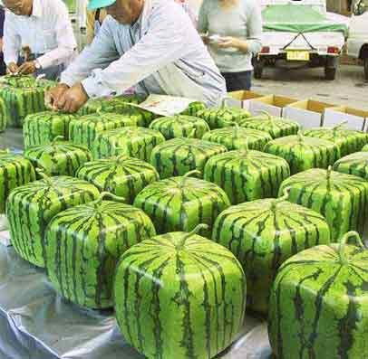 [square+watermelons]