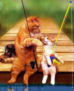 Image result for summer cat