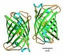 Beer can structure of green fluorescent protein