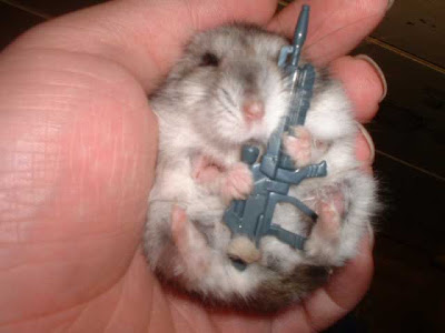 cute hamster photo holding a weapon