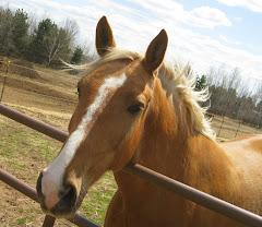 My Horse Gentle John