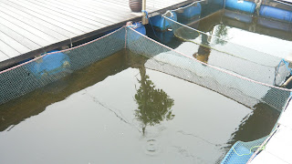 the fish farm
