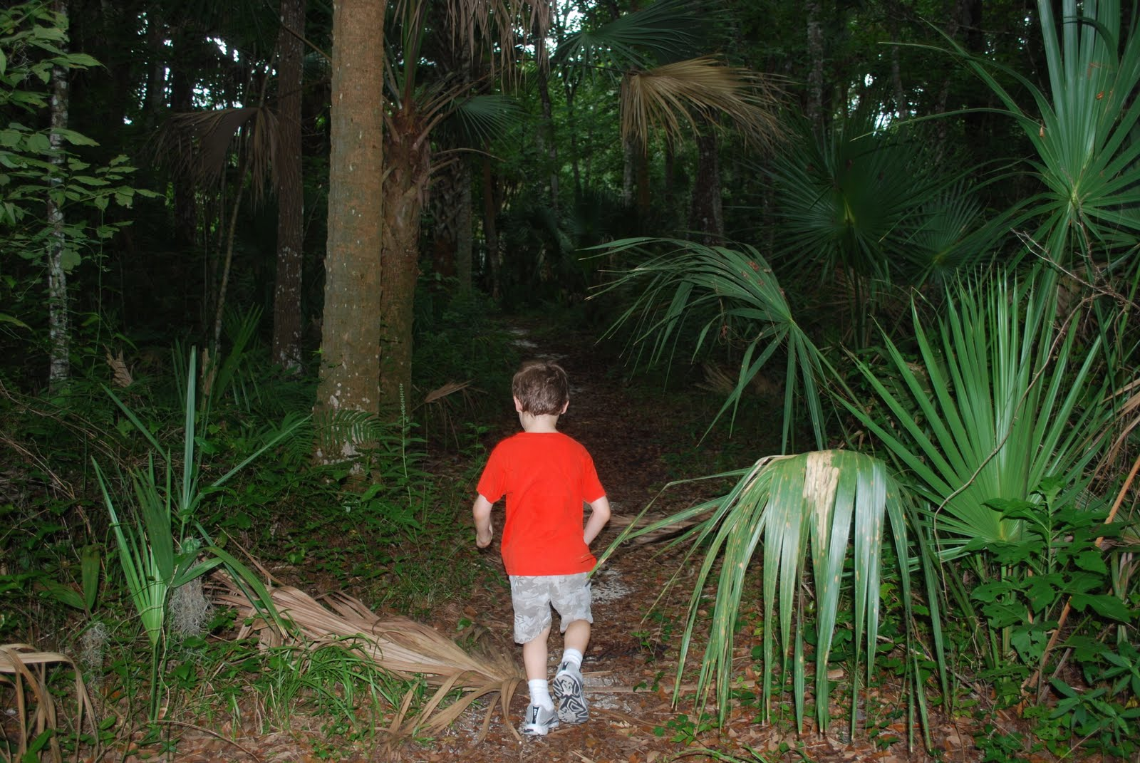 Florida Daytripping On A Dime Sugar Mill Botanical Gardens A Free Trip To The Sugar Mill And