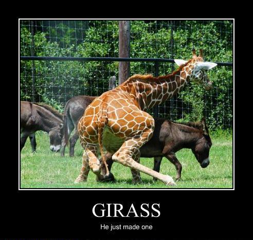 1:15 AM Adult Jokes, Funny Animals, Funny Pictures No comments