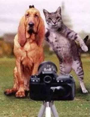 http://3.bp.blogspot.com/_y8qhm316y84/Re3ykrDt6FI/AAAAAAAAAKw/3nxyzJUSuOg/s400/cat-picture.jpg