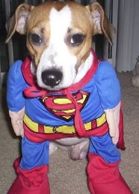 Superman Puppy
