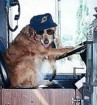School Driver Dog