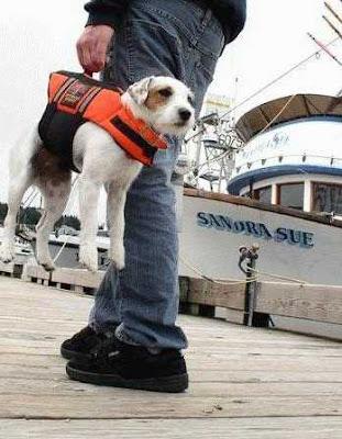 Dog Lifter