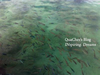 manukan island snorkeling fish