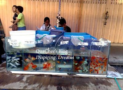 gaya market fish