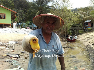 kuching kampung fisherman puffer fish