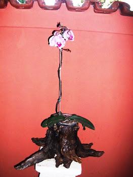 Raiz com orquídea