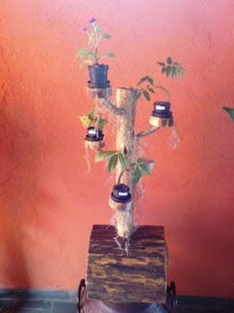 Base para mini bonsai