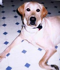 Puppy #1 Kennedy