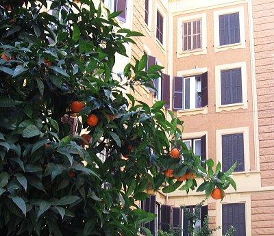 [orange_tree.jpg]