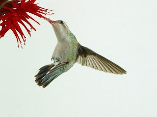 brian doyle essay joyas voladoras