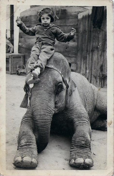 Elefante e sua amiga