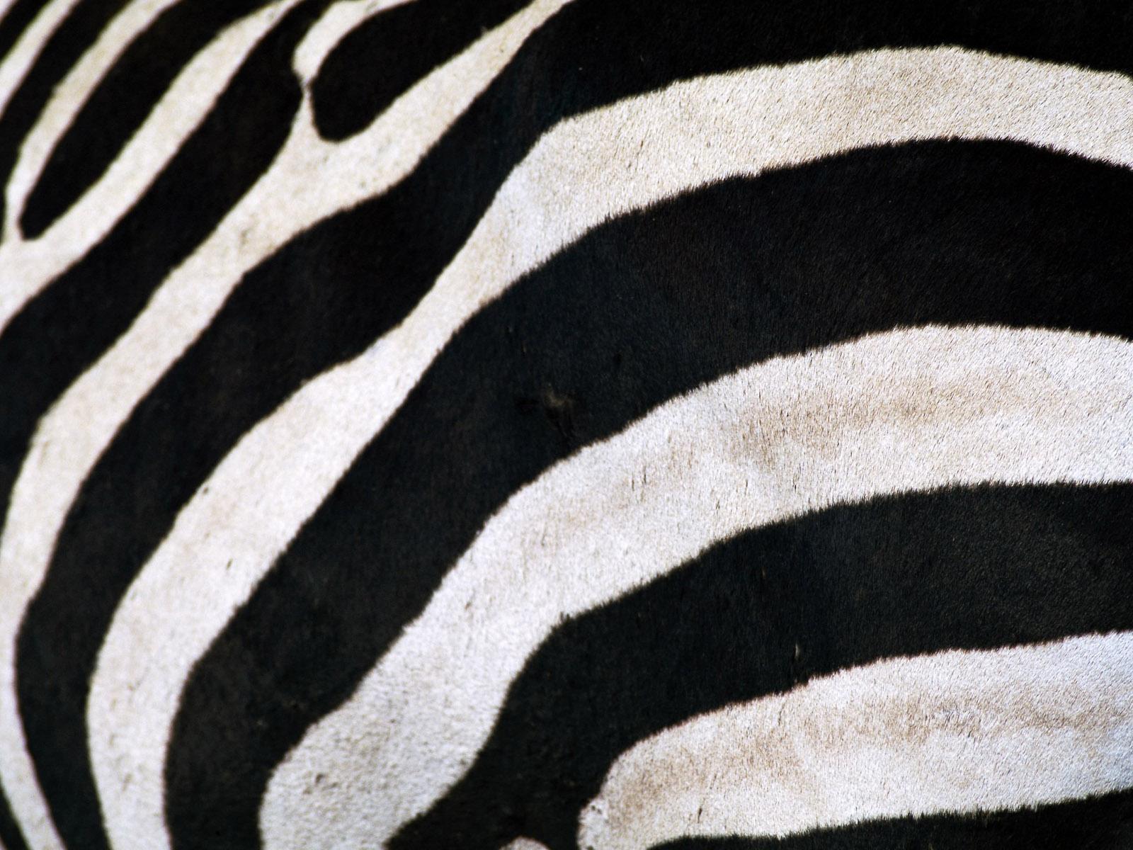 http://3.bp.blogspot.com/_yE5MdOzF31w/TEdIs-laJqI/AAAAAAAAAO0/IUxpQM7cS5U/s1600/Animals+Wallpapers+%2856%29.jpg