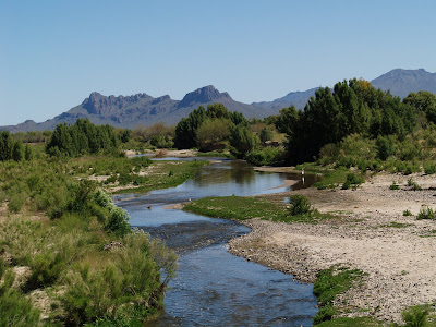 Beetle Paradise at the Santa Cruz River