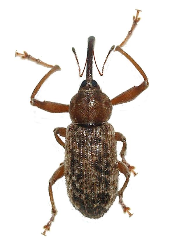 Bed Bugs Cottonwood Arizona