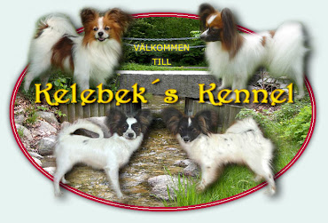 Kelebeks Kennel