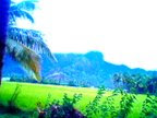 Green Nagercoil
