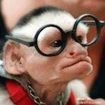 Musing Monkey