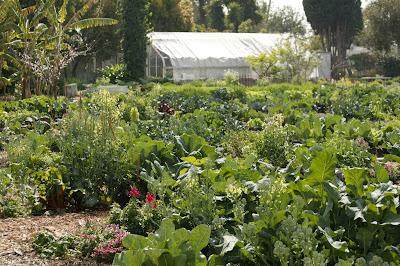 learningcenterjpg - The Learning Garden