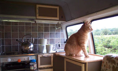 campervan conversion interior with cat