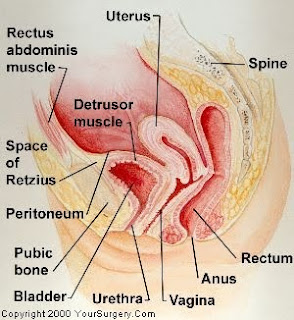 how to tell if you have a bladder infection