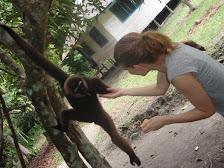 Jibones en Borneo