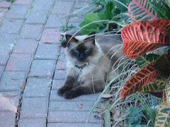 My Garden Pal - Mocha