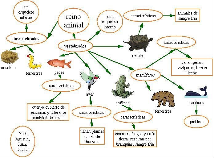 imagen del reino animal: