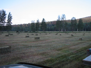 field+4 Bringing in the Hay