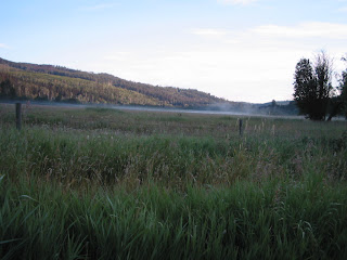 uncut+field Bringing in the Hay
