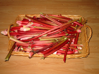 rhubarb+1+Aug+7+08 How to Make Rhubarb Wine